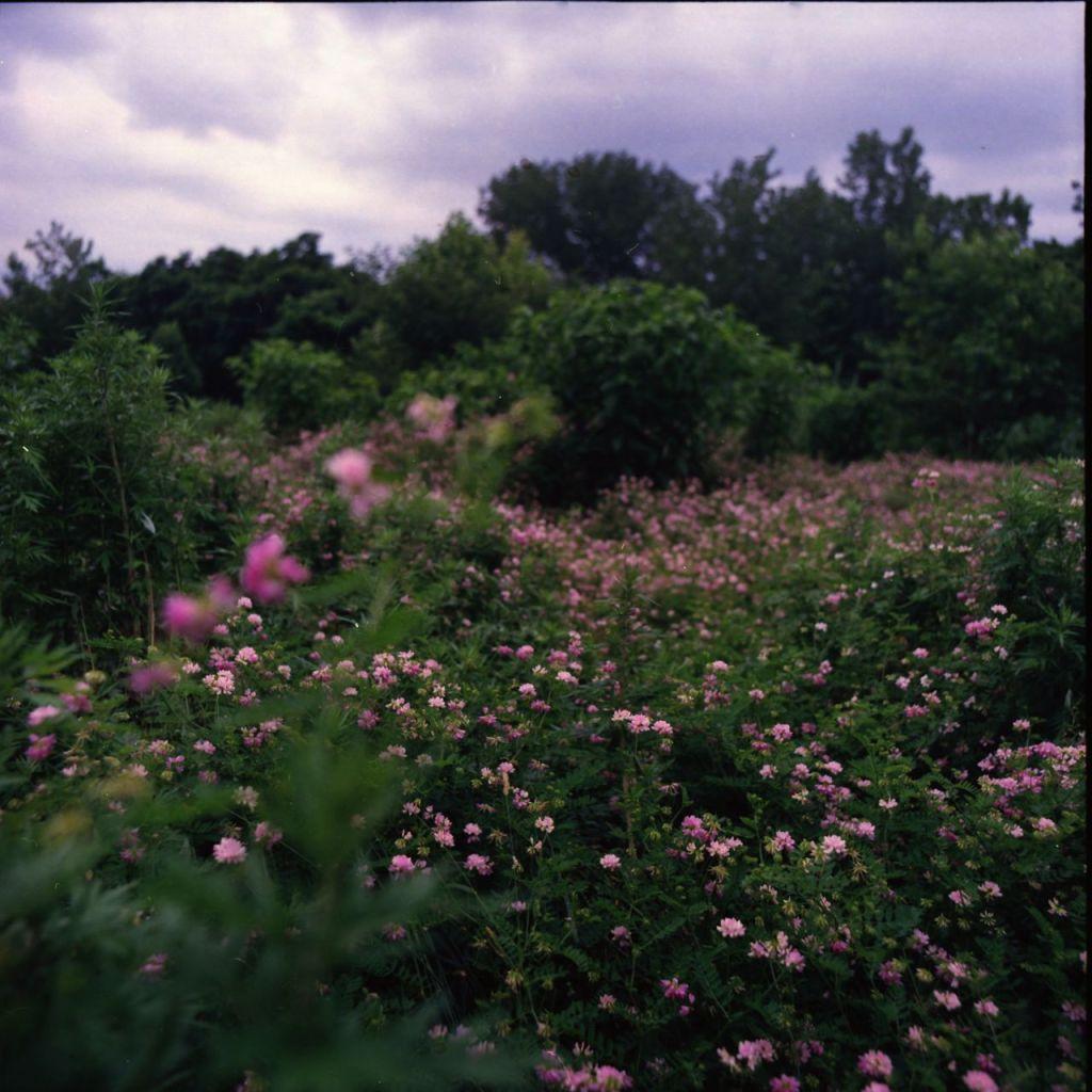 Bartram Garden