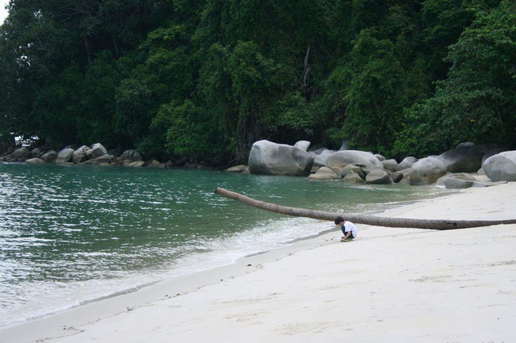 penang national park monkey beach penang national park ペナン モンキービーチ