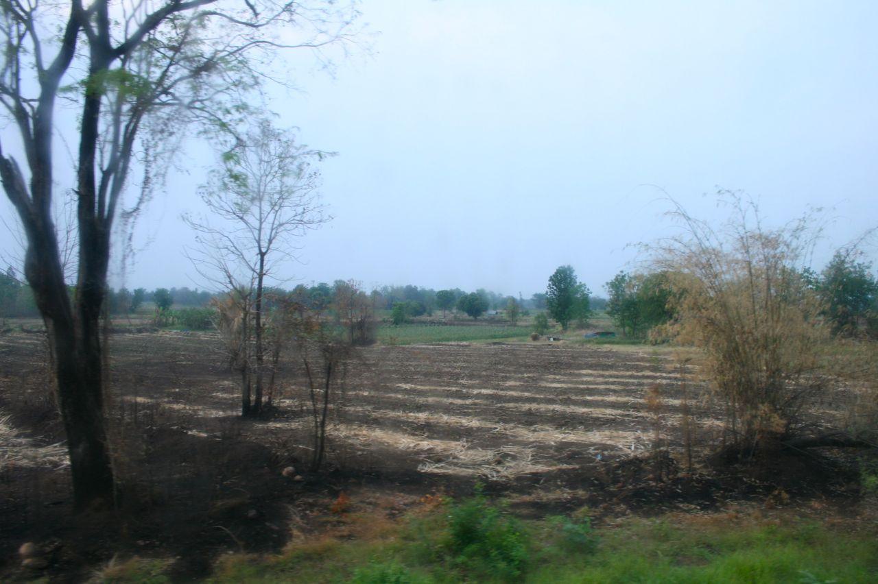 チェンマイからスーコタイへのバスの車窓より見える焼き畑。On the way to sukhothai to Chiang Mai. Typical slash-and-burn farming.