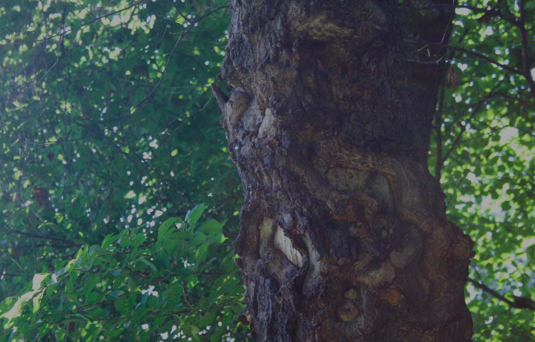 森にて スズメバチを隠しどり