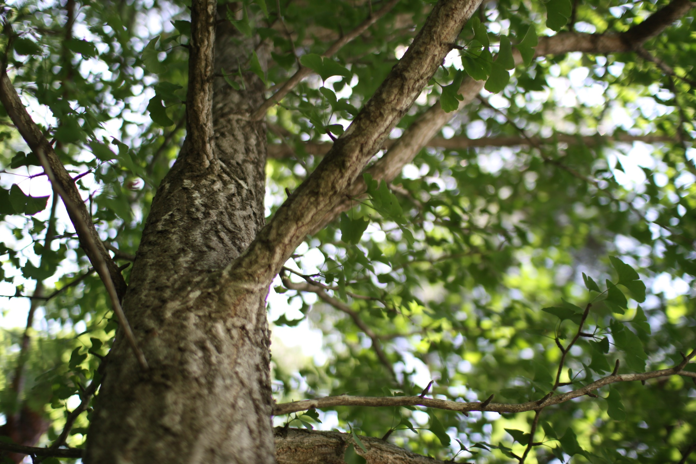 森 forest