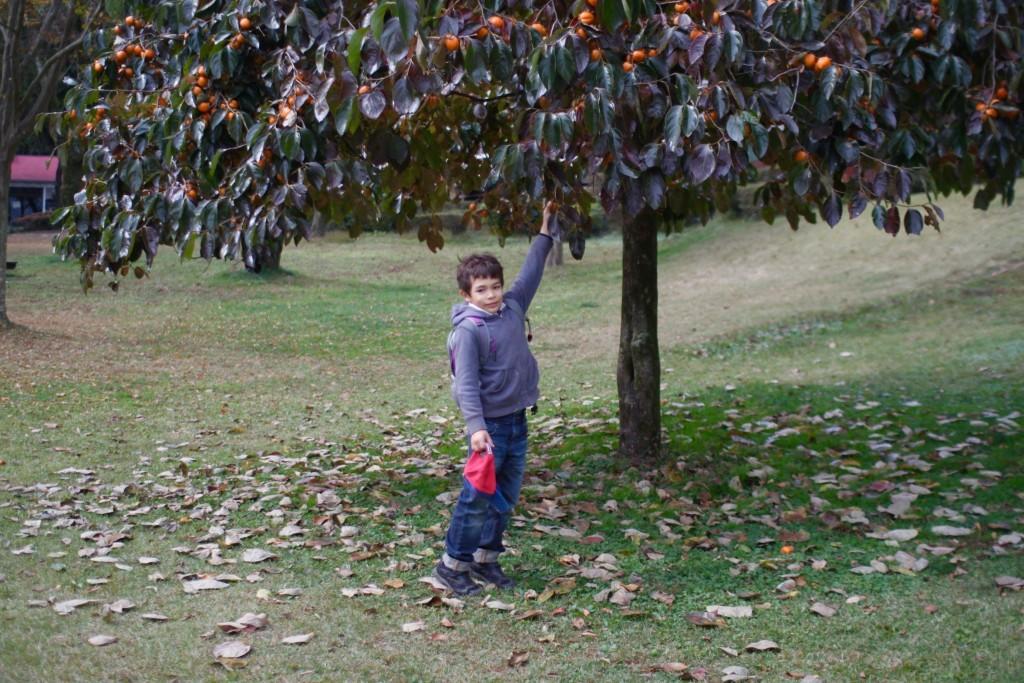 山梨は、桃やぶどうだけでなく、柿の産地でもあるようです。