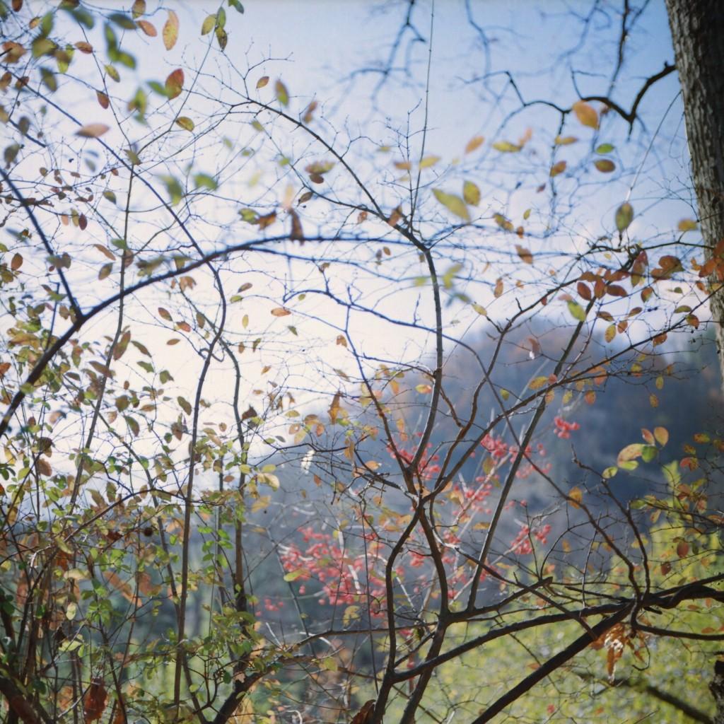 森で forest, KODAK Ektar100, Rolleiflex T