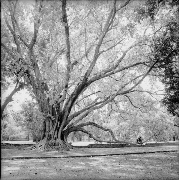 スーコタイ歴史公園にて Sukhothai 2015