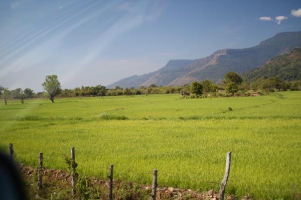 行き帰りの道。乾季なのですが、時々緑の水田をみかけます。Champasak, Laos