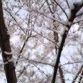 雪 snow