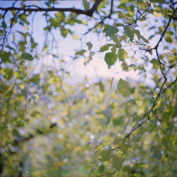 森にて Kodak Ektar100, Rolleiflex T